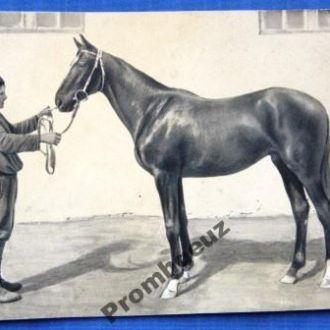 Скакун. фото куплено на ВСХВ 2. Лошадь.