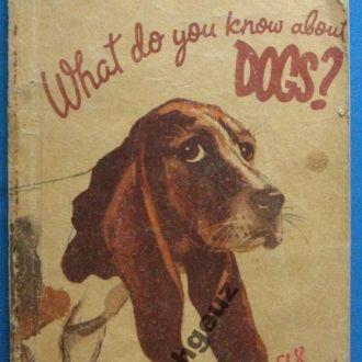 Что вы знаете о собаках? на английском языке.