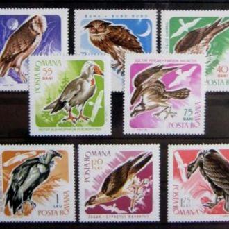 птицы фауна орлы соколы хищники  birds румыния