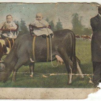 открытка Одесса 1909г Дети и коровы черный юмор