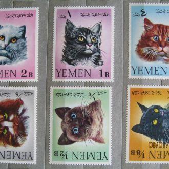 животные  звери фауна   коты тигры кошки ЙЕМЕН