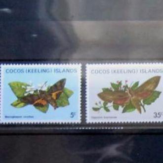 насекомые бабочки кокос