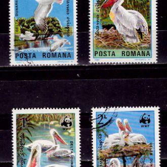 Фауна.Румыния.Пеликаны. 4м 24