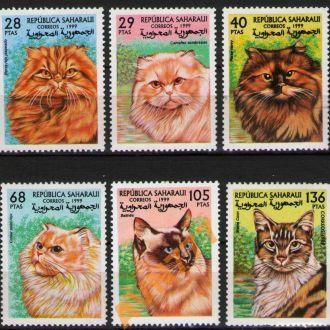 Сахара 1999 Кошки Персы Бали Мейн-кун серия **