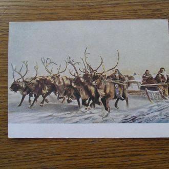 Гонки оленьих упряжек Маркерованная открытка53 год