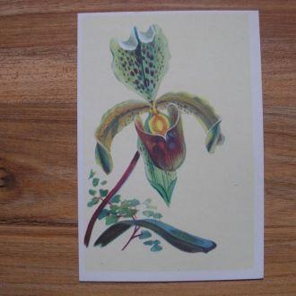 Цветы открытка И. Чарнэцка Орхидея Польша живопись