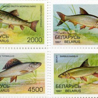 Беларусь 1997 Рыбы. Блок + серия марок MNH