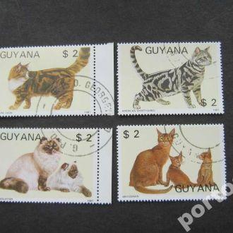 4 марки Гуаяна 1987 кошки