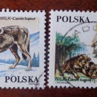 Польша 1985г. волки