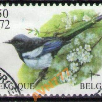 Бельгия 2001 Фауна птицы Сорока концовка 7,5 евро
