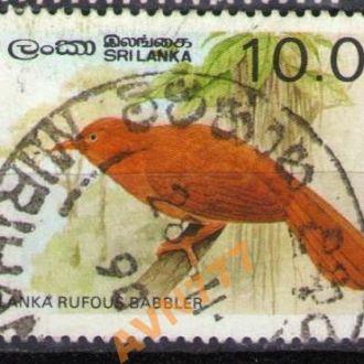 Шри Ланка 1987 Фауна птицы