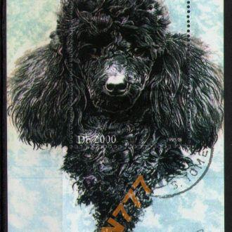 С.Томе и Принсипи 1995 Собаки пудель блок