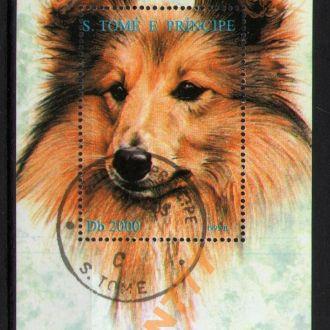 С.Томе и Принсипи 1995 Собаки колли блок