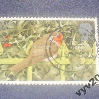 Англия-1995 г.-Птица