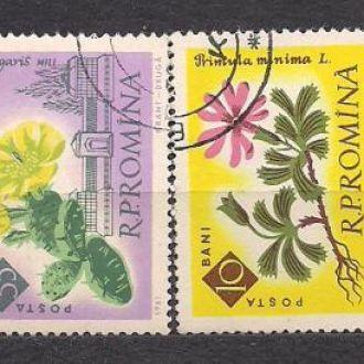 Румыния,1961г.,флора, цветы