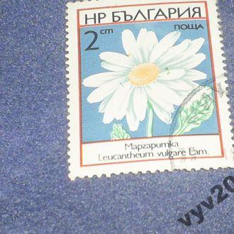 Болгария-1973 г.-Ромашка