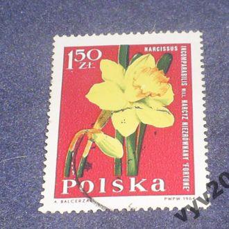 Польша-1964 г.-Нарцисс