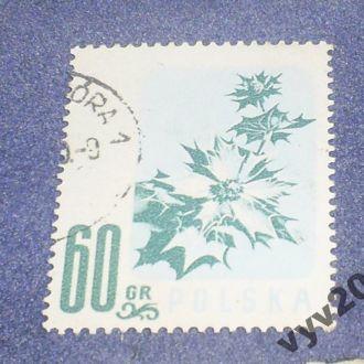 Польша-1957 г.-Цветок