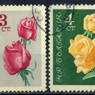 Болгария. Цветы 1962 г.