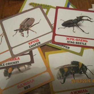 карточки насекомые 16шт жуки украинско-английский