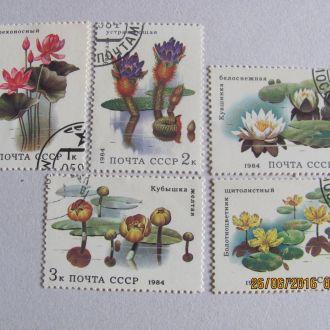 ссср цветы 1984 гаш