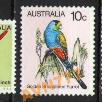 Австралия Фауна птицы
