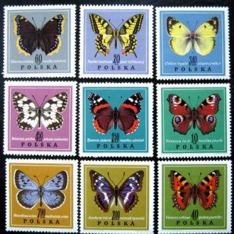 польша  фауна бабочки