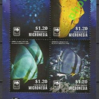Микронезия 2014 ВВФ фауна морская рыбы бл.**