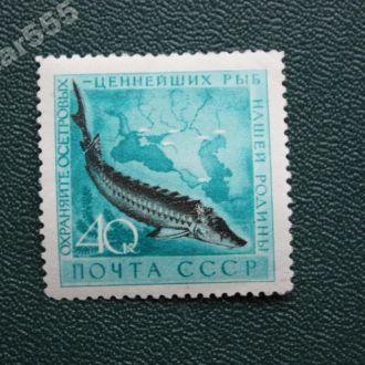 СССР 1959 Осетр *