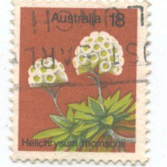 Австралия цветы флора