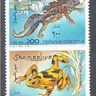 Сомали 1996 фауна Африки земноводные жабы ** о