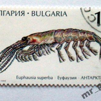 Болгария - Креветка