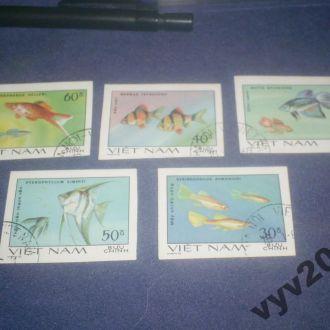 Вьетнам-1981 г.-Рыбы б/з