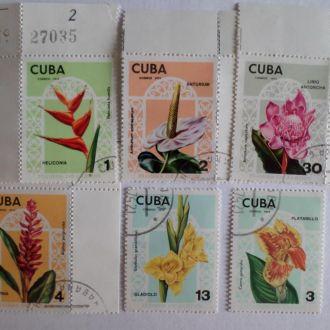 Куба цветы КЦ=7,5м