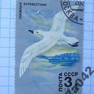 Марка почта СССР 1978 Снежный буревестник Фауна