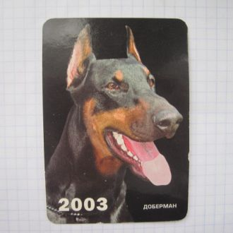 Доберман  2003 год