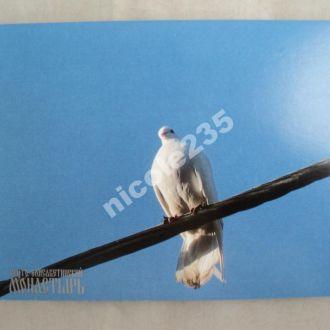 Новая открытка Голубь Рождество С днем рождения С рождеством Религия Христианство Белый голубь