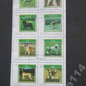 м/лист Гвинея Эваториальная 1977 собаки
