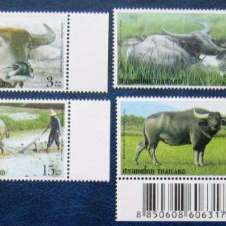 таиланд буйвол животные фауна