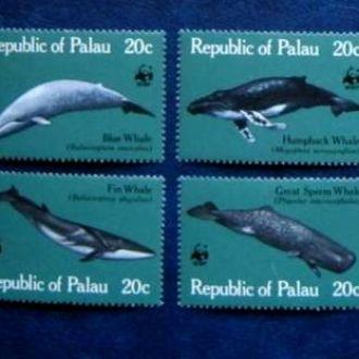 фауна   рыбы палау киты дельфины море wwf