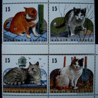 фауна кошки бельгия коты