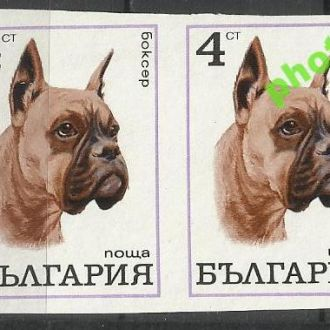 Болгария 1970 фауна собака боксер 2м.б/з(*)