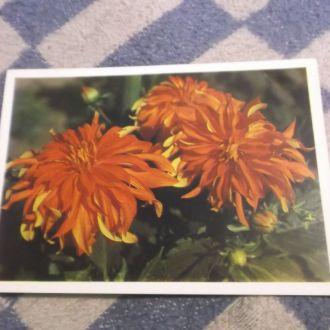 Цветы.4 открытки.