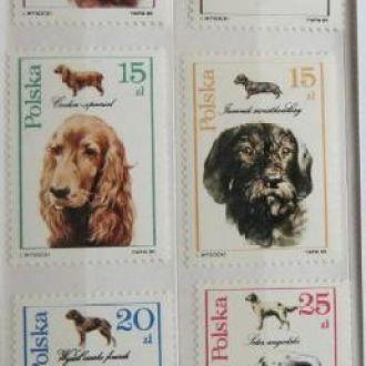 животные  звери фауна   собаки псы dogs