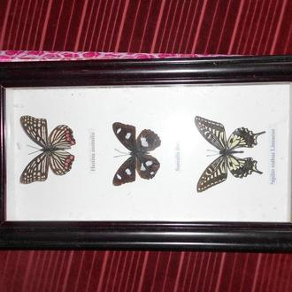 1..набір метеликів