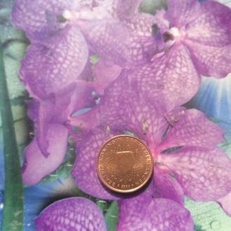 Голландия 1цент 2004г