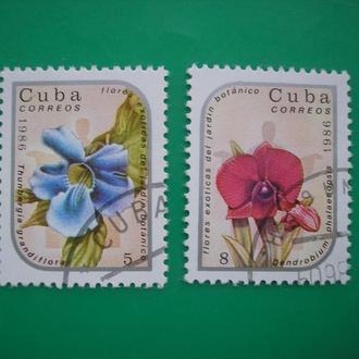 Куба Цветы