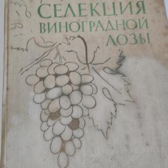 Селекция виноградной лозы П.Айвазян