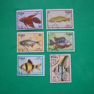Куба 1977 Рыбы Морская фауна * полн. сер.