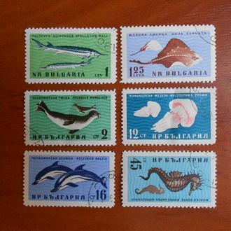 Болгария 1961 Фауна Черного моря